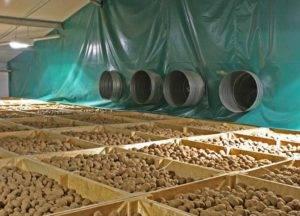How-to-Storage-Potato