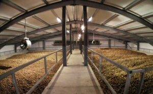 How-to-Storage-Potatoes-for-Frozen-French-Fries-Production-Line