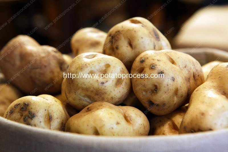 Introduction of Ireland Potato Processing Industry