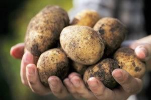 Introduction-of-Uzbekistan-Potato-Chips-Industry