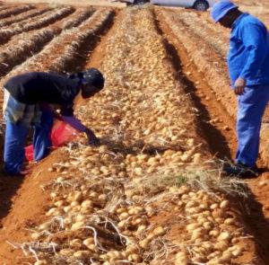 Tanzania-French-Fries-Industry-Introduction