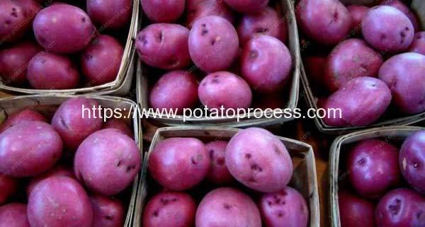 New Peruvian gmo potato variety to help in fight against child anemia