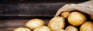 First GMO modified, PVY resistant potato goes on sale in 2019 in Argentina
