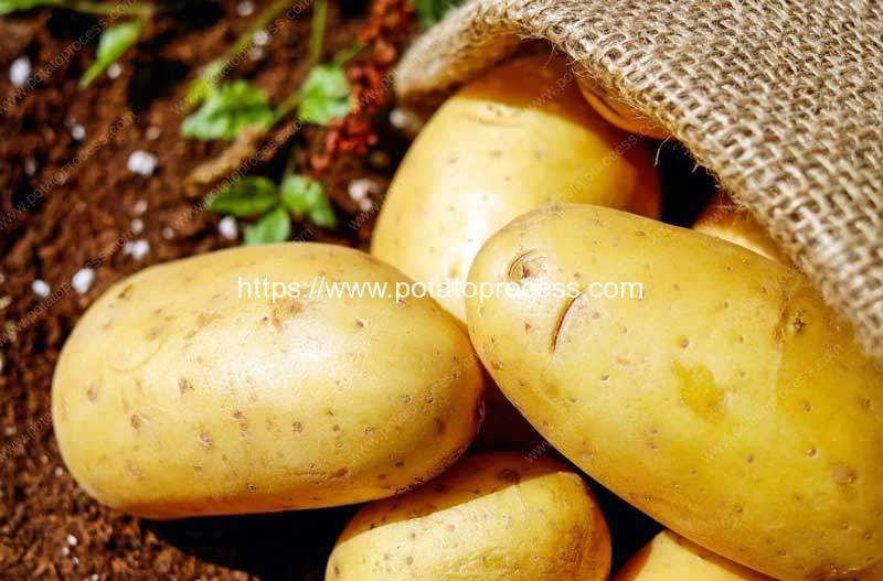 Potato-Uses-and-Potato-Processing-Machine-Review-in-2020