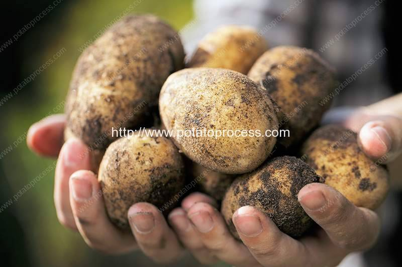 Introduction of Uzbekistan Potato Chips Industry