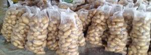 Pakistan-Potato-Chips-Industry-Introduction