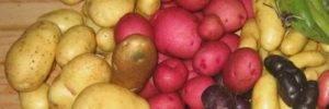 Cornell improves global access to potato breeding material